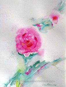 2016-02-02 sonoma Rose RW